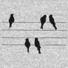 Birds on a Wire by brookexx09