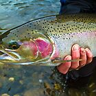 North Fork, Idaho steelhead hen by amontanaview