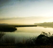 Quiet Morning on the Bayou by Jonicool