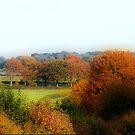 Cross Country -Dorset by naturelover