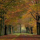 Fall  by LarsvandeGoor