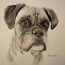Boxer dog by Peter Lawton