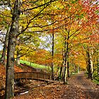Autumn Woodland Walk by Jim Wilson