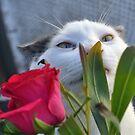 Sniffin the roses.. by Karen01