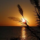 Pampas sunrise by Angela McIntyre