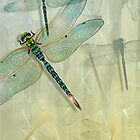 Dragonfly by LADecor