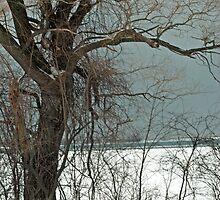 Naked Tree by ArianaMurphy