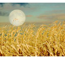 Corn Moon by Nikella