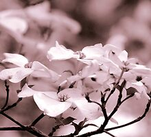 Dogwood in Pink by kelleygirl