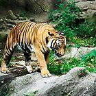 Indochinese Tiger by Sergey Kahn