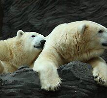 Polar Bears: Snuggle by Daniela Pintimalli