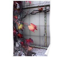 Rustic Autumn Vines Against An Old Building 5 Poster