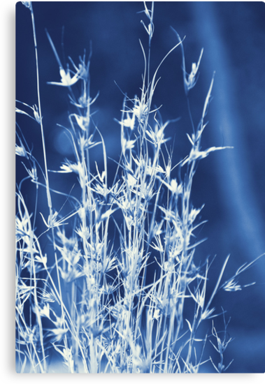 Cyanotype Native Lemongrass by Carol Knudsen