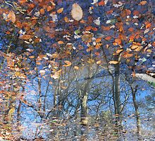 Canopy Reflections by Blagnys
