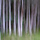 Paperbarks by Kitsmumma