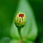 New Born Flower by aditya sakha  kusuma
