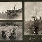 Grass Tree Triptych by pennyswork