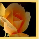 BIRTHDAY CARD - APRICOT ROSE by Magaret Meintjes