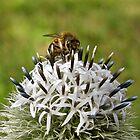 Pollen Profusion by John Thurgood