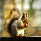 Red squirrel gone grey by Tarolino