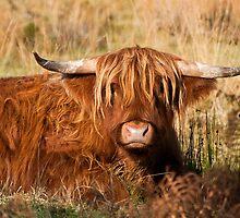 Highlander by Peter Lawrie