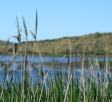 Reeds at Goolwa by Joanne Emery