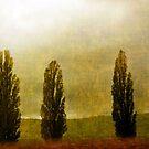 Standing in Fog by Gayle Dolinger