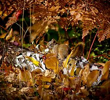 Fall Squirrell in Leaves by PhoenixPhotogs