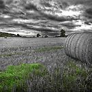 Hay Bales by Roddy Atkinson