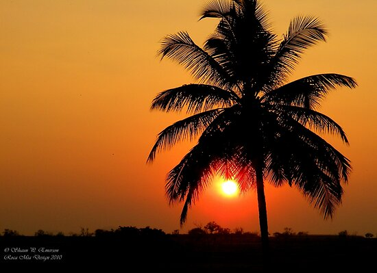 Palm Sunset by rocamiadesign