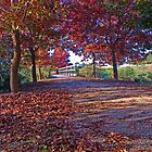 Autumn Leaves by Andrew (ark photograhy art)