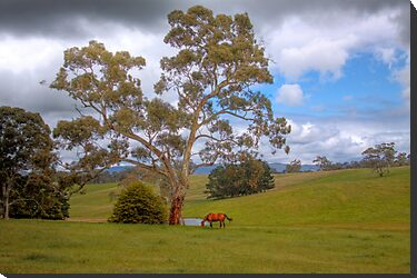 Blakiston - Mattners Rd - Balhanna, Adelaide Hills, South Australia by Mark Richards