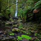 Erskin Falls by Andrew (ark photograhy art)