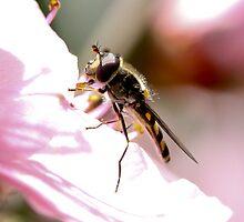 Hover fly heaven by john  Lenagan