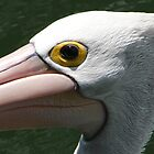 The Eye of a Pelican by aussiebushstick