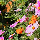 Pink and Orange flowers by Caroline Hannessen