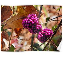 American Beauty Berries Tyler State Park Poster