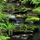 Sheoak Creek  by Stephen Ruane