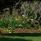 lets peek out to the blue yonder (Floridas bird paradise ) by Isa Rodriguez