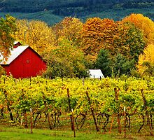 Fall at the Winery by Kathleen Jones
