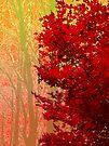 Red Maple in Autumn by Marcia Rubin