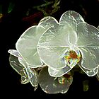 White Orchid 11 by Janis Lee Colon