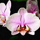 Purple Orchid by Janis Lee Colon