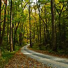 Into the Forrest by Phillip M. Burrow