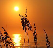 Sea oat silhouette - Carolina Beach by jabo7