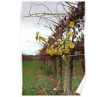Winter vinyard  Poster