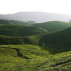 Evergreen Munnar by Siju Doniston
