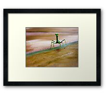 OK I'm not the famous gecko but I'm just as cute... Framed Print