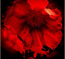 Red by Deb Gibbons