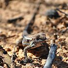 mallee dragon by jeroenvanveen